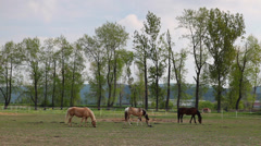 Beautiful horses on the spring pasture Stock Footage