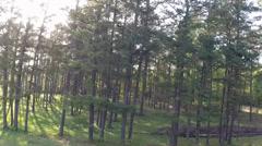 Stock Video Footage of Strafing Treeline