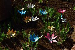 decoration flower beds - stock photo