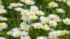 Spring Wild Flowers Stock Footage