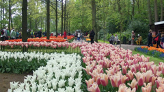 LISSE, THE NETHERLANDS - APRIL 22 2014: Keukenhof is the Garden of Europe. Stock Footage