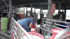 Asian men loading fresh fish on a pickup after a fish auctioning. Stock Footage