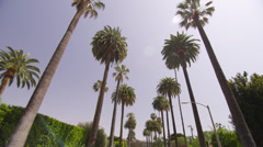 Palm Trees in Beverly Hills Los Angeles California vacation beautiful driving 4K Stock Footage
