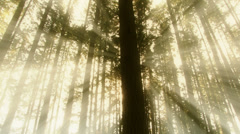 Dream light coming through trees low angle Stock Footage