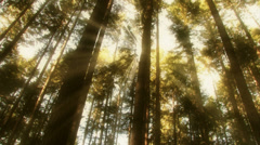 Dream effect light through trees low angle Stock Footage