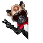 Stock Photo of cowboy dog