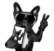 selfie dog - stock photo