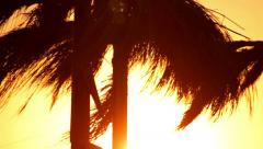 Tropical beach sunset with coconut palm tree leaves silhouettes Stock Footage