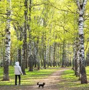 Stock Photo of evening walking in sunny spring birch park with first greens