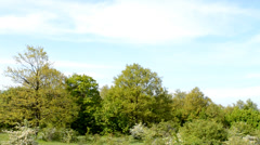 Tree line panorama with bushes - stock footage