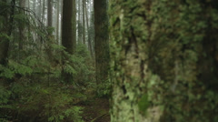 Fir Trees, Pacific Northwest Forest Stock Footage
