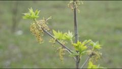 Tree sapling tip Stock Footage