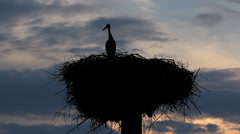 Stork silhouette in the nest at sunset, looking for partner Stock Footage