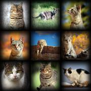 Cats images collection, nine pictures of different pets with added vignette Stock Photos