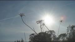Head of dry plants Stock Footage