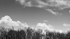 Cumulus Cloud Time lapse BW Above the Treeline Stock Footage