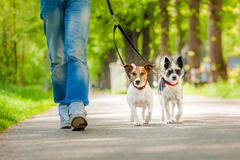 dogs going for a walk - stock photo
