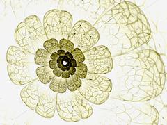 yellow fractal flower with yellow details on petals, on white - stock illustration