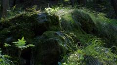 Nature (camera slider) - stock footage