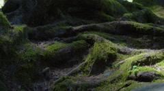 Nature roots (camera slider) - stock footage