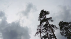 Clouds in overcast day on the background of trees. Timelapse. Stock Footage