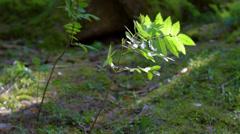 Nature plant (camera slider) - stock footage