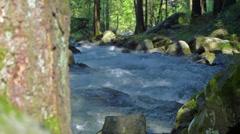 Nature stream (camera slider) - stock footage