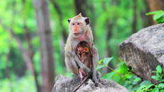 Monkeys in the wild nature Stock Footage