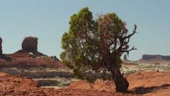 Canyonlands National Park the Maze District Juniper Tree Stock Footage