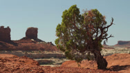 Stock Video Footage of Canyonlands National Park the Maze District Juniper Tree Locked Shot