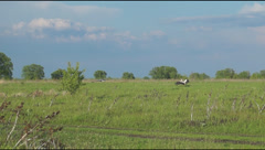 Stork flying over the meadow Stock Footage