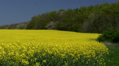 Rape Seed Field on Rugen Island - Baltic Sea Coast, Northern Germany Stock Footage