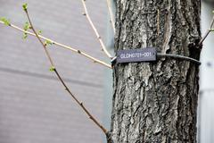 The numerical labels on the tree in Tokyo Japan. - stock photo
