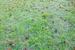 Leaf grass Stock Photos