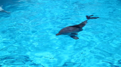 Dolphin dived Stock Footage