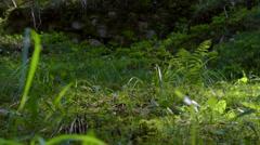 Nature grass (camera slider) - stock footage