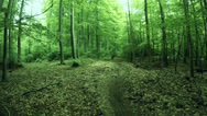 Stock Video Footage of Mountain Biker in green Forest