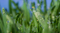 Green Grass Close-up, Shot Slider HD Footage