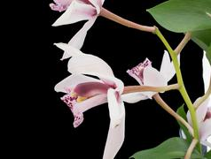 Close-up of an orchid plant - stock photo