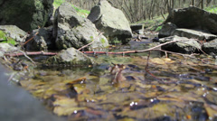Mountain stream - stock footage