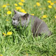 big grey cat in spring - stock photo
