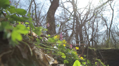 It was spring in the forest Stock Footage