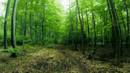 Stock Video Footage of Green Forest motion view in 4k