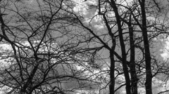 Cumulus Cloud Time lapse BW Through Trees - stock footage