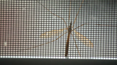 Large mosquito on window screen looking in Stock Footage