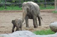 Stock Photo of Elephants