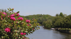 Roses mountain river lake lure Stock Footage