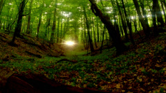 Sunset in the green forest, the sun is blinking through the leaves Stock Footage