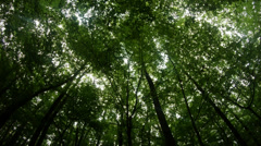 dizzy from the spring forest view from the bottom up panorama - stock footage