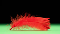 Red feather blowing Stock Footage